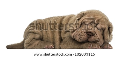Side view of a Shar Pei puppy lying down, sleeping, isolated on white - stock photo