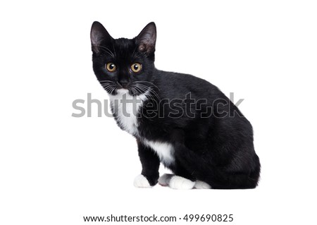 Side view of a sitting black kitten isolated on white