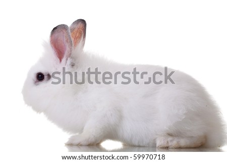 side view of a white little rabbit on white background