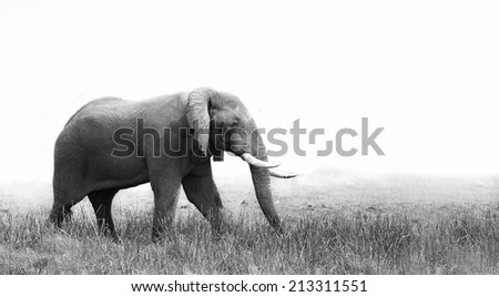 Side view of an elephant - stock photo