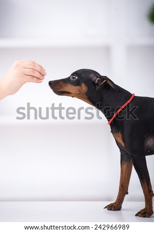 Side view of cute dog is eating food from hand.