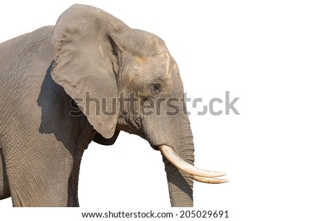 Side view of Elephant head on white background with clipping path - stock photo