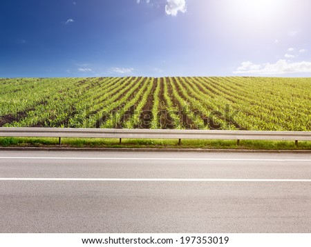 Side view of empty asphalt road and corn crops in background - stock photo