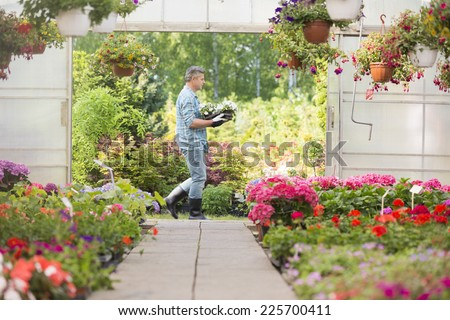 Side view of gardener carrying crate with flower pots while walking outside greenhouse - stock photo