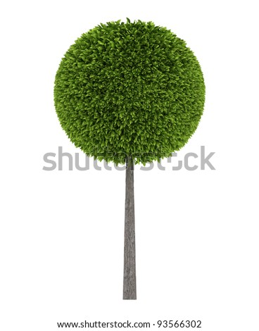 side view of Green round tree isolated over white - stock photo