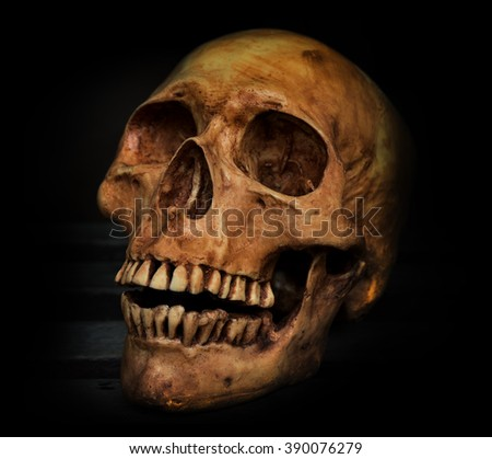 Side view of human skull - stock photo
