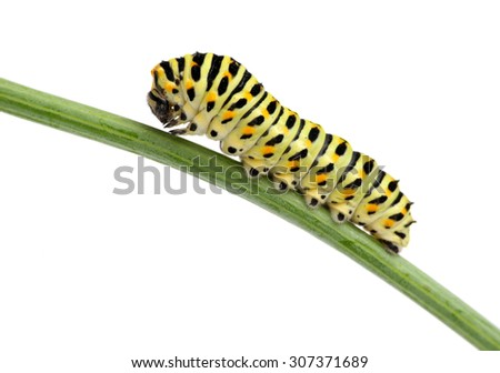 Side view of pest green caterpillar isolated on white  - stock photo