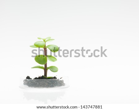 side view of petri dish with a small sprout of a leafy plant emerging from a clump of dirt, against a white background - stock photo
