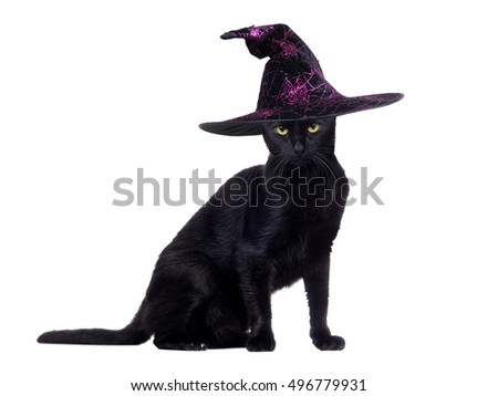 Side view portrait of a sitting  black cat wearing black witch hat