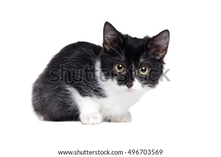 Side view portrait of a sitting small mixed breed black and white kitten