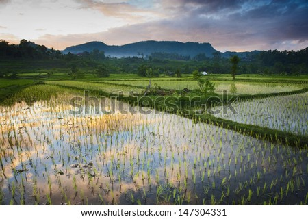 Sidemen, Bali. New rice is planted in a flooded field. The beautiful sunrise is reflected in the water. Sidemen has some of the most beautiful rice terraces in all of Bali. - stock photo