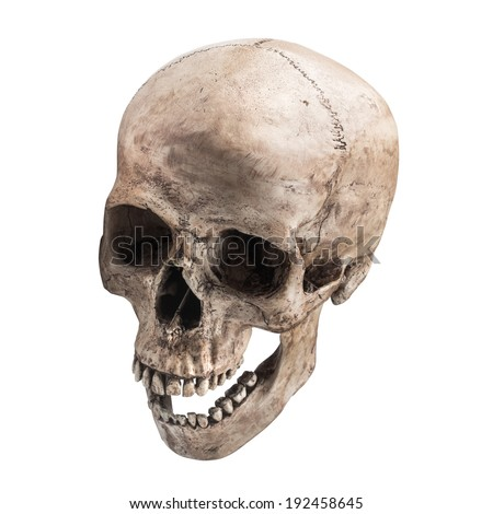 sideview of human skull open mouth on isolated white background - stock photo