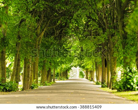 sidewalk walking pavement alley path with trees in park. nature landscape. summer walk. - stock photo