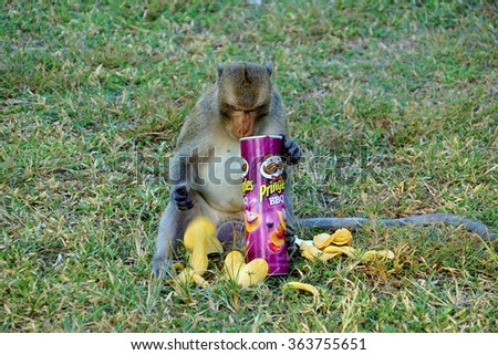 SIEM REAP, CAMBODIA -10 DEC 2015- A monkey eating Pringle chips in front the Angkor Wat temple in Cambodia. Pringles is sold in more than 140 countries.