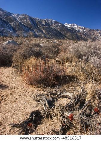 Sierra Nevada mountains - stock photo