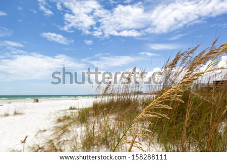 Siesta Key Beach grasses.  Located on the gulf coast of Sarasota Florida with white powdery sand.  Shallow depth of field with sharpest focus on the grasses. - stock photo