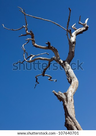 Sight of a dead tree against an empty cloud sky. - stock photo