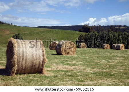 Silage rolls - stock photo