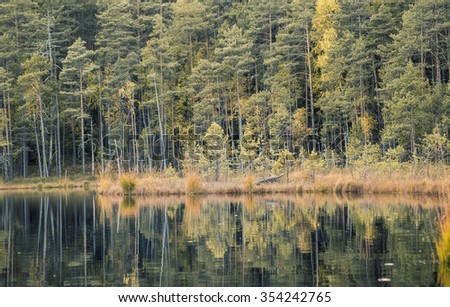 silent forest lake in autumn with yellow grass and trees