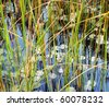Silent pond with the water lilies blossoming in water - stock photo