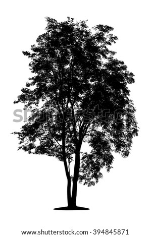 silhouette a tree silhouette Isolated on white background clipping path - stock photo