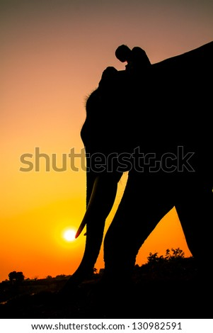 silhouette action of elephant  in Ayutthaya Province, thailand.