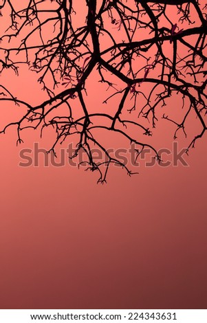 Silhouette background