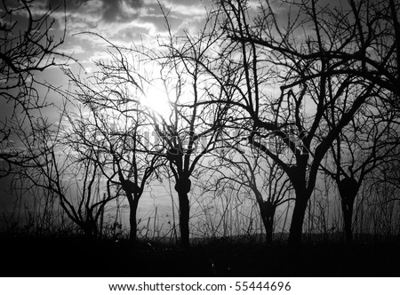 silhouette bare trees and branches in backlit at the early daybreak - stock photo