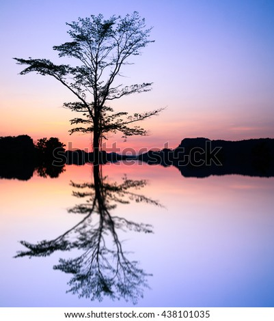 Silhouette,Big  tree of dead over the river sunrise in background.beautiful tree dry landscape big one over the river sunset Image selective focus at the dead tree. pastel concept. - stock photo