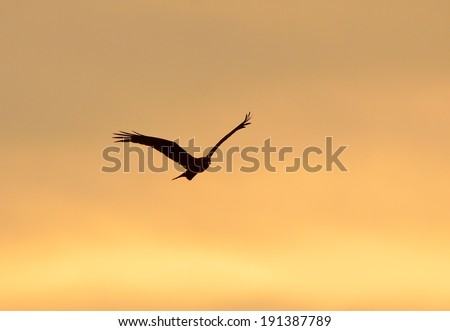 Silhouette bird flying at sunset