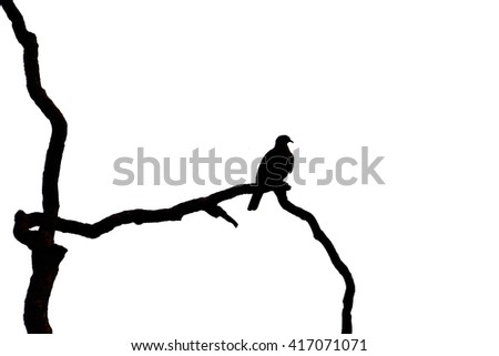 silhouette bird on branch tree