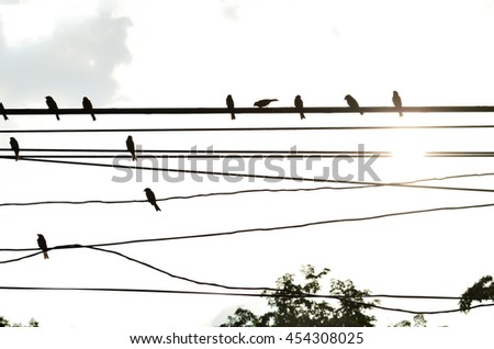 silhouette bird perched on electric cable in the park after raining