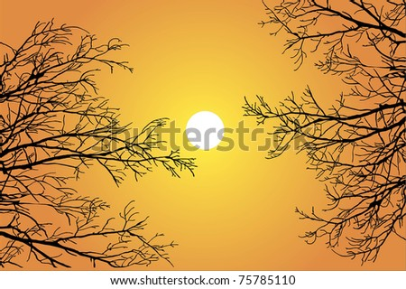 Silhouette branch