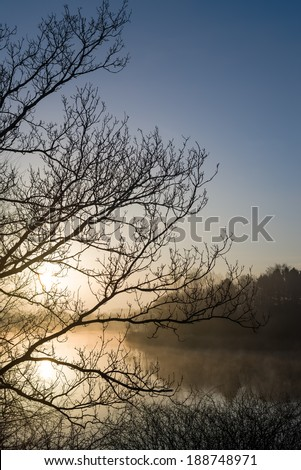 Silhouette branches in front of sunrise and lake