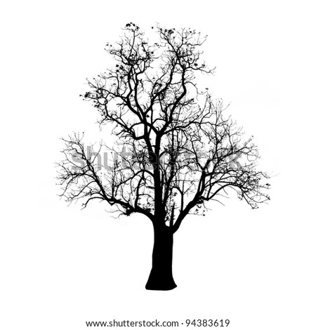 silhouette branches tree isolated on white - stock photo