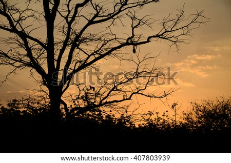 Silhouette branches with sunset background.Branches with little leaves in front of sunset sky