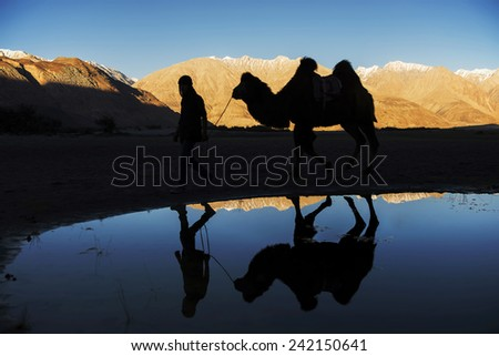 silhouette camel reflection and snow mountain range Nubra Valley Ladakh ,India - September 2014