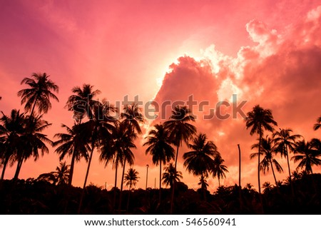 Silhouette coconut garden with colorful sunset background