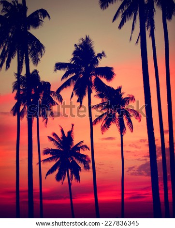 Silhouette Coconut Palm Tree Outdoors Concept - stock photo