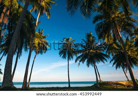 Silhouette coconut palm trees against blue sky with sun light. Summer sea beach concept - stock photo