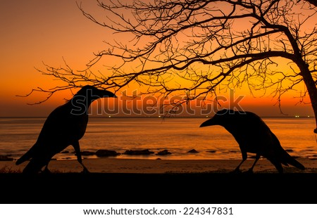 Silhouette crow and dead tree at sunset for halloween background - stock photo