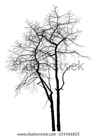 Silhouette dead tree isolated on white background - stock photo