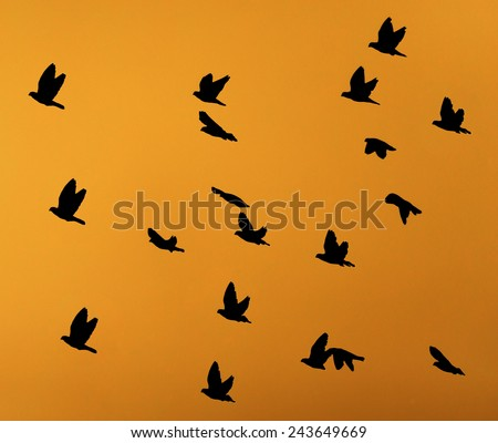 silhouette dove on a background of a sunset - stock photo