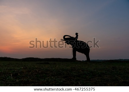 Silhouette Elephant and mahout at sunrise