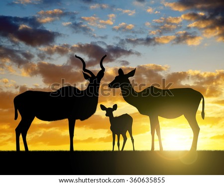 Silhouette Greater kudu at sunset  - stock photo