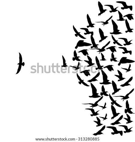 silhouette group of flying seagull birds with one individual bird going in the opposite direction white background. - stock photo