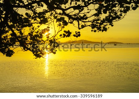 Silhouette image of Tree with gold sky and gold water on Sunset background at Songkhla Lake Thailand:Close up,slelect focus with shallow depth of field:ideal use for background. - stock photo