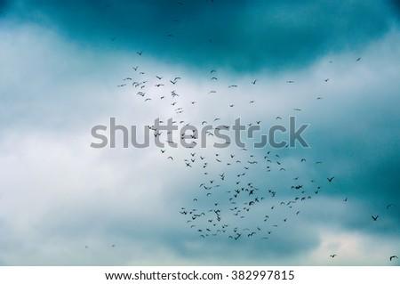 silhouette in the sky flock of birds - stock photo