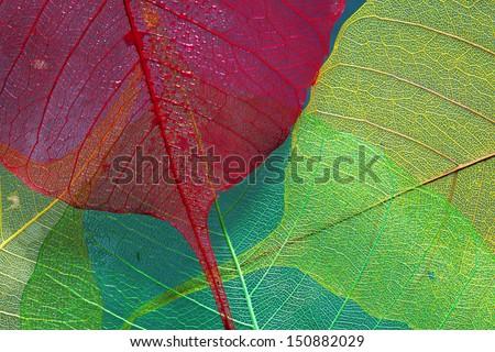 silhouette leaf three 2 - stock photo
