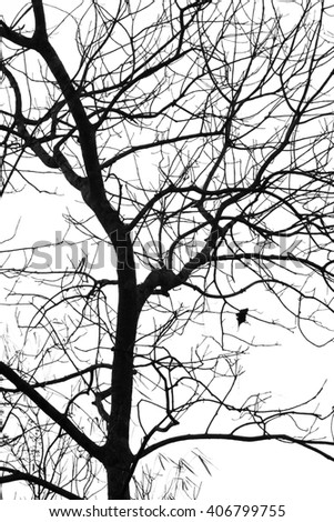 Silhouette leafless tree isolated on white
